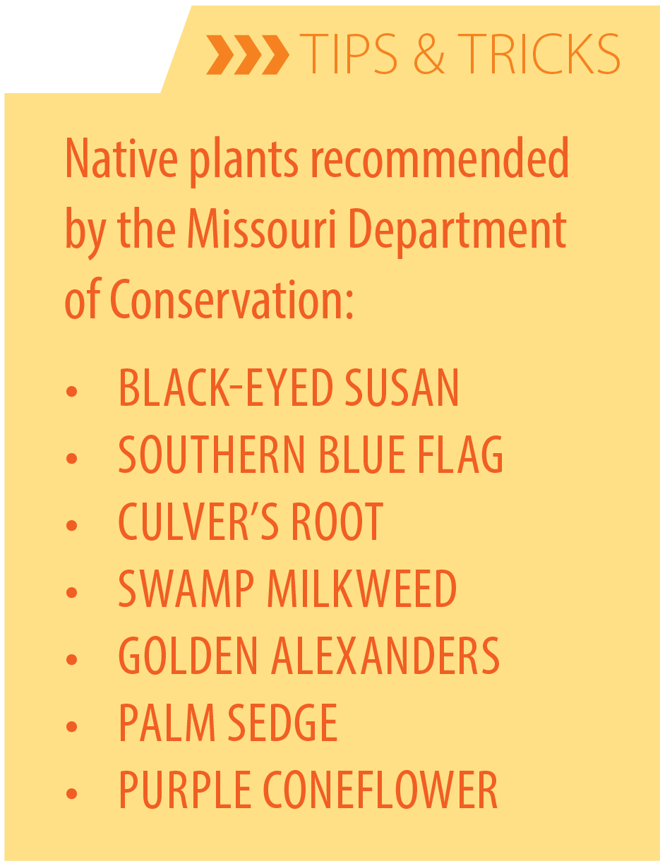 tips for native plants