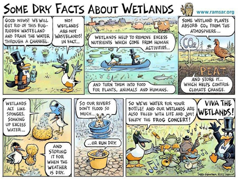 Wetland Dry Facts